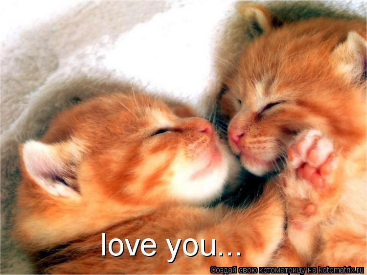 Котоматрица: love you...