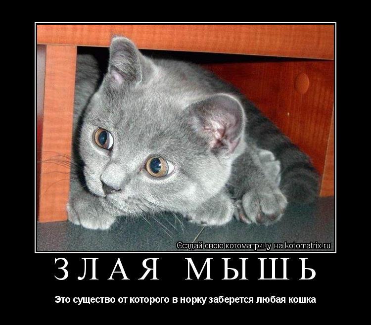 Котоматрица: Злая мышь Это существо от которого в норку заберется любая кошка