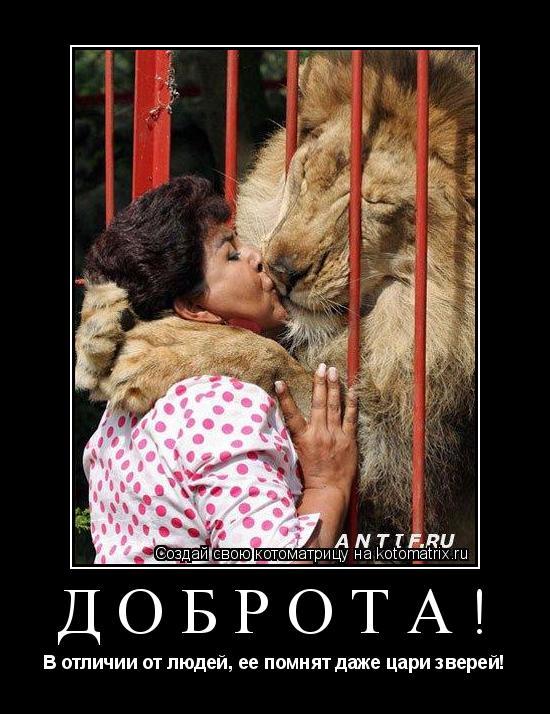 Котоматрица: ДОБРОТА! В отличии от людей, ее помнят даже цари зверей!