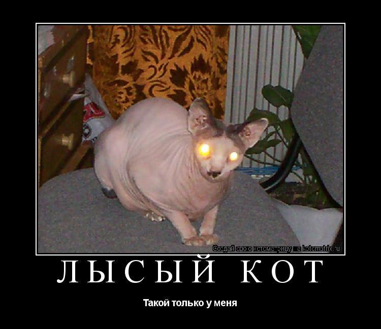 Котоматрица: Лысый кот Такой только у меня