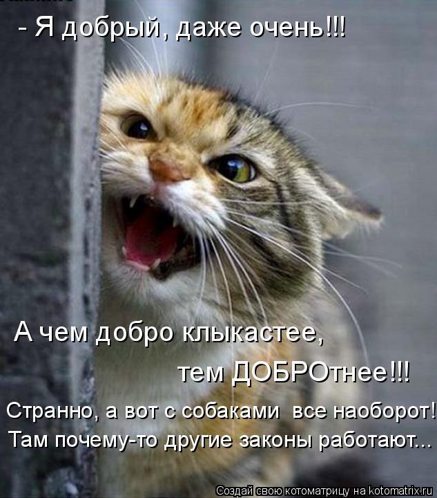 Котоматрица: - Я добрый, даже очень!!! А чем добро клыкастее, тем ДОБРОтнее!!! Странно, а вот с собаками  все наоборот! Там почему-то другие законы работают...