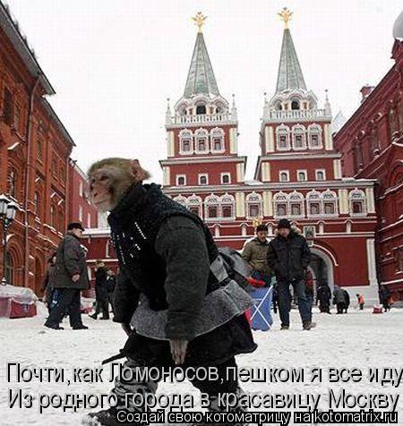 Котоматрица: Из родного города в красавицу Москву Почти,как Ломоносов,пешком я все иду