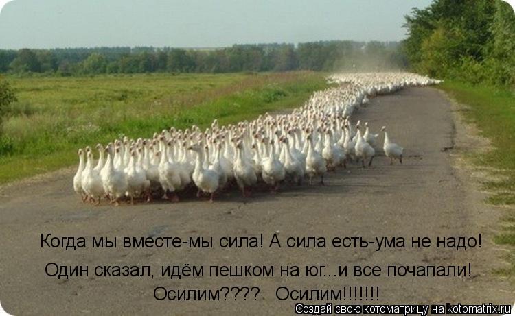 Котоматрица: Когда мы вместе-мы сила! А сила есть-ума не надо! Один сказал, идём пешком на юг...и все почапали! Осилим????   Осилим!!!!!!!