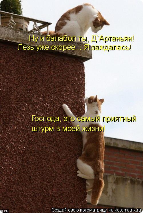 Котоматрица: Господа, это самый приятный  штурм в моей жизни! Ну и балабол ты, Д`Артаньян! Лезь уже скорее... Я заждалась!