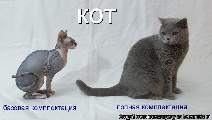 Котоматрица: кот базовая комплектация полная комплектация