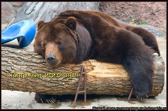 Котоматрица: Топтыжкин, иди спать!!!