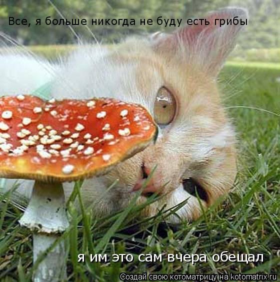 Котоматрица: Все, я больше никогда не буду есть грибы я им это сам вчера обещал