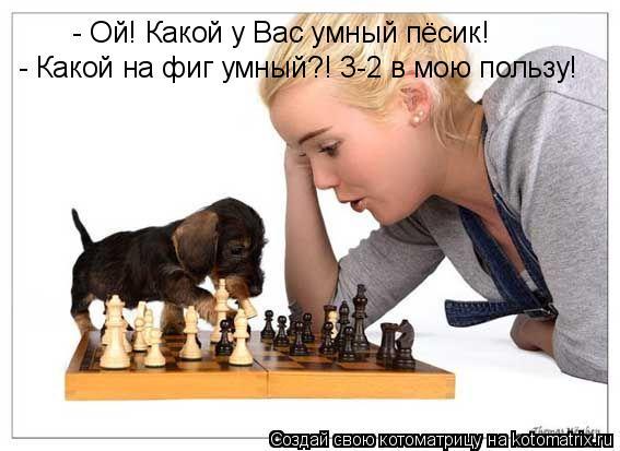 Котоматрица: - Ой! Какой у Вас умный пёсик! - Какой на фиг умный?! 3-2 в мою пользу!