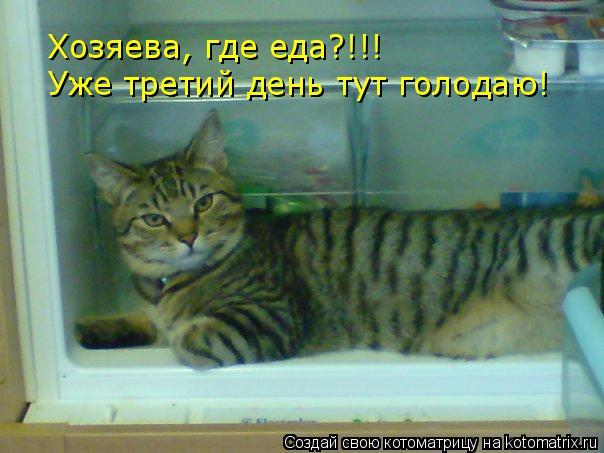Котоматрица: Хозяева, где еда?!!! Уже третий день тут голодаю!