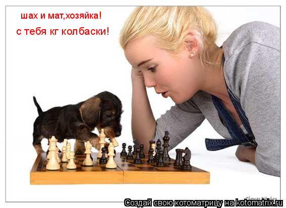 Котоматрица: шах и мат,хозяйка! с тебя кг колбаски!
