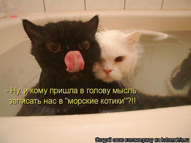 """Котоматрица: - Ну, и кому пришла в голову мысль записать нас в """"морские котики""""?!!"""