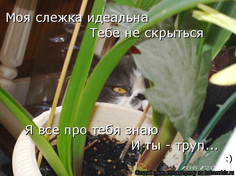 Котоматрица: Моя слежка идеальна Тебе не скрыться Я все про тебя знаю И ты - труп... :)