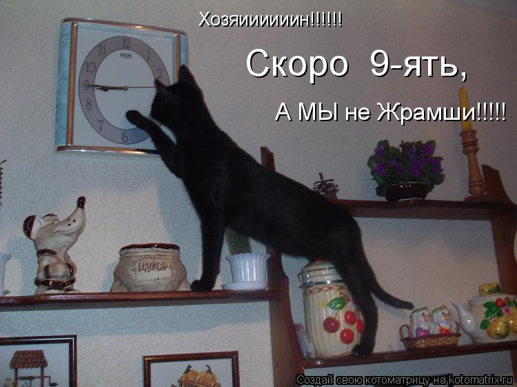 Котоматрица: Хозяиииииин!!!!!! Скоро  9-ять,  А МЫ не Жрамши!!!!!