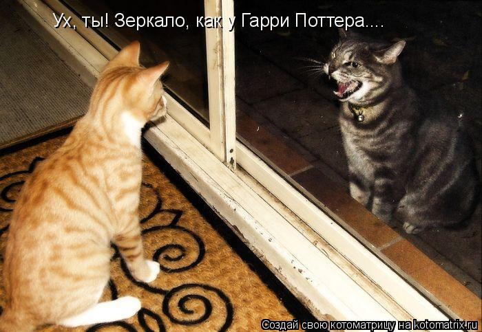 Котоматрица: Ух, ты! Зеркало, как у Гарри Поттера....