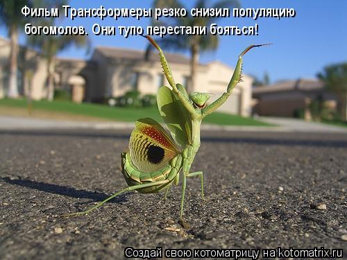Котоматрица: Фильм Трансформеры резко снизил популяцию богомолов. Они тупо перестали бояться!