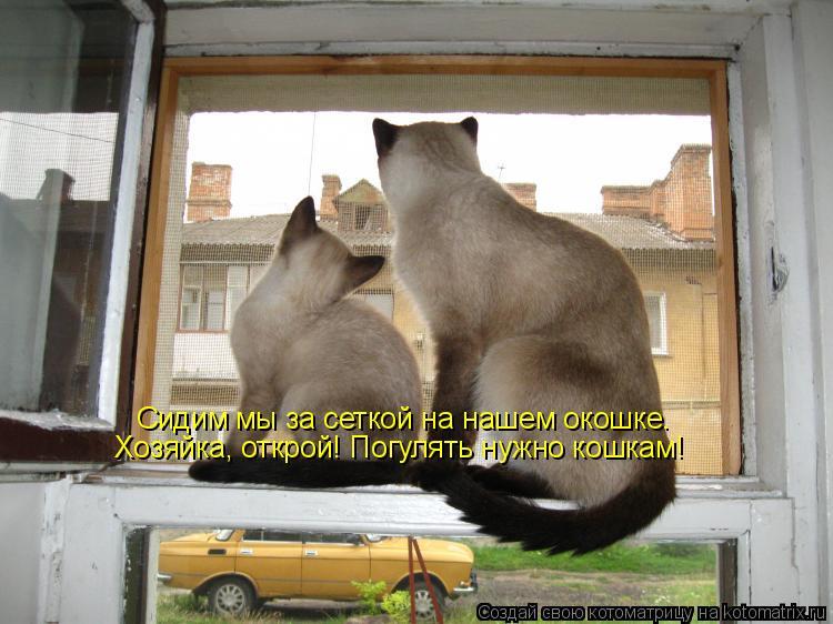 Котоматрица: Сидим мы за сеткой на нашем окошке. Хозяйка, открой! Погулять нужно кошкам!
