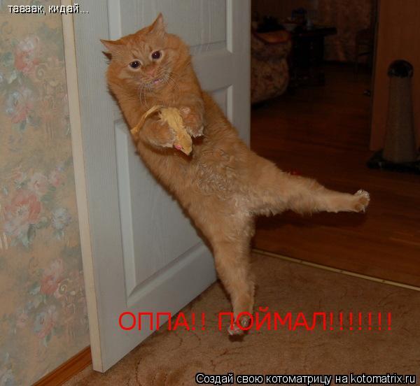 Котоматрица: таааак, кидай... таааак, кидай... ОППА!! ПОЙМАЛ!!!!!!!