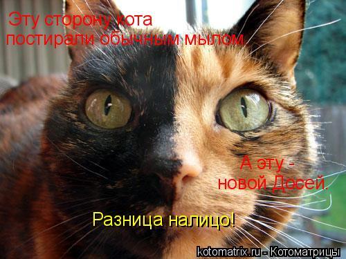 Котоматрица: Эту сторону кота А эту -  новой Досей. постирали обычным мылом. Разница налицо!