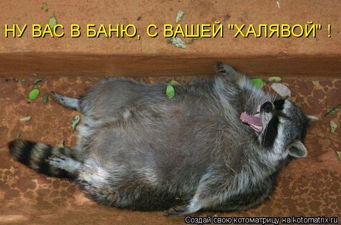 """Котоматрица: НУ ВАС В БАНЮ, С ВАШЕЙ """"ХАЛЯВОЙ"""" !"""
