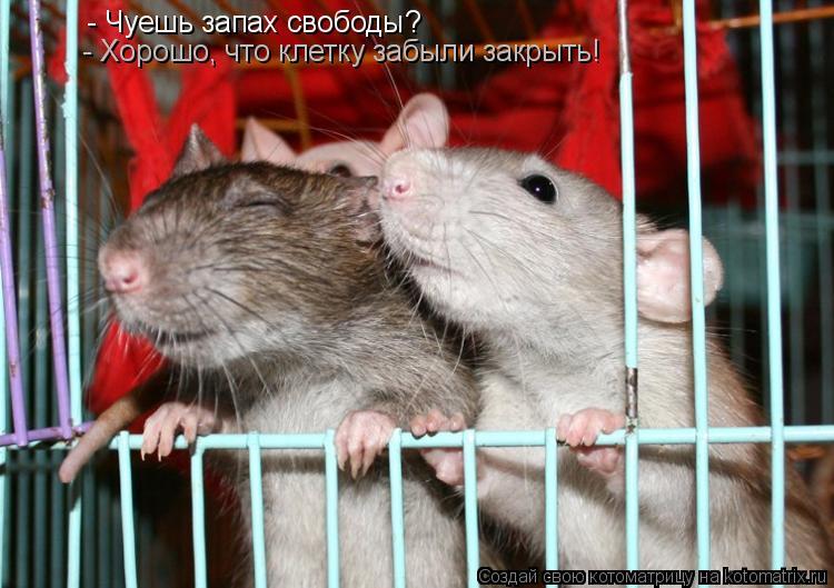 Котоматрица: - Чуешь запах свободы? - Хорошо, что клетку забыли закрыть!
