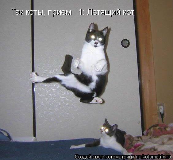 Котоматрица: Так коты, прием № 1: Летящий кот
