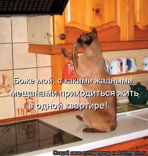 Котоматрица: Боже мой, с какими жадными  мещанами приходиться жить  в одной квартире!