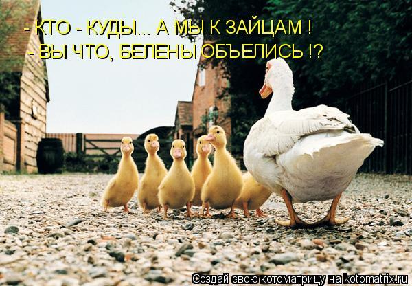 Котоматрица: - КТО - КУДЫ... А МЫ К ЗАЙЦАМ ! - ВЫ ЧТО, БЕЛЕНЫ ОБЪЕЛИСЬ !?