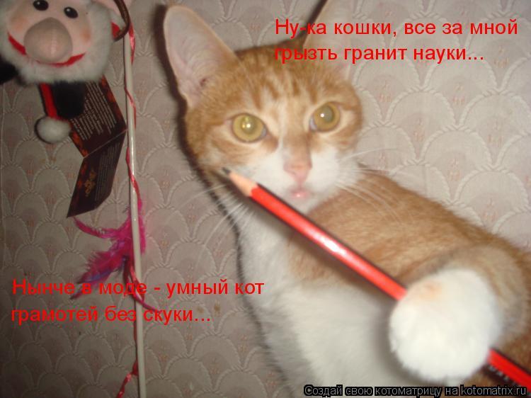 Котоматрица: Ну-ка кошки, все за мной грызть гранит науки... Нынче в моде - умный кот грамотей без скуки...