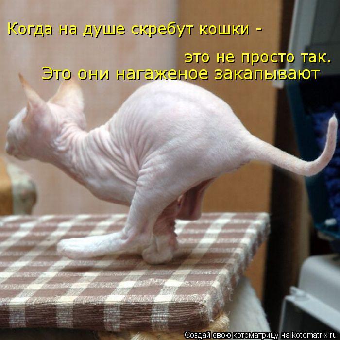 Котоматрица: Когда на душе скребут кошки - это не просто так.  Это они нагаженое закапывают