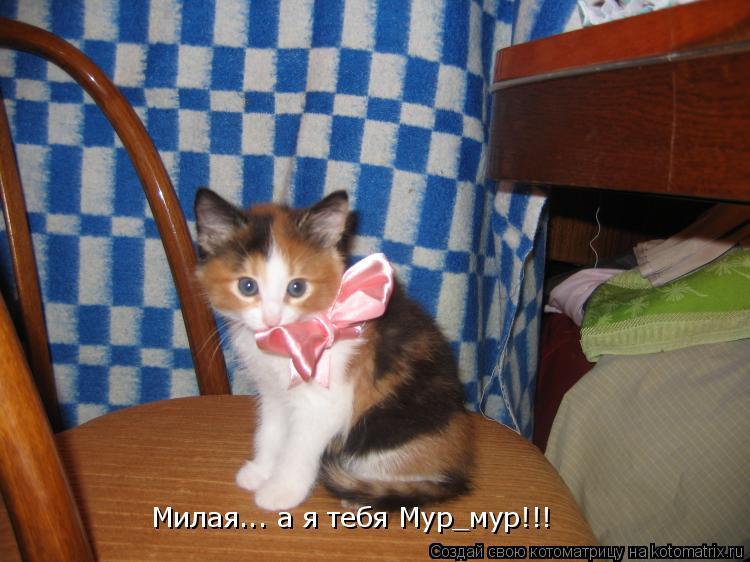 Котоматрица: Милая... а я тебя Мур_мур!!!