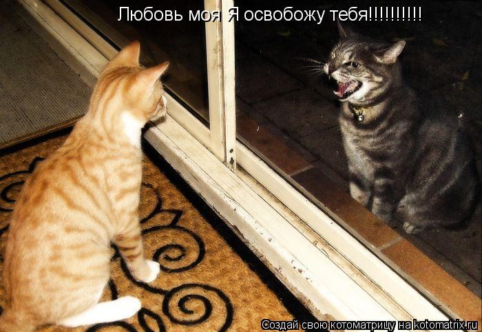 Котоматрица: Любовь моя Я освобожу тебя!!!!!!!!!!