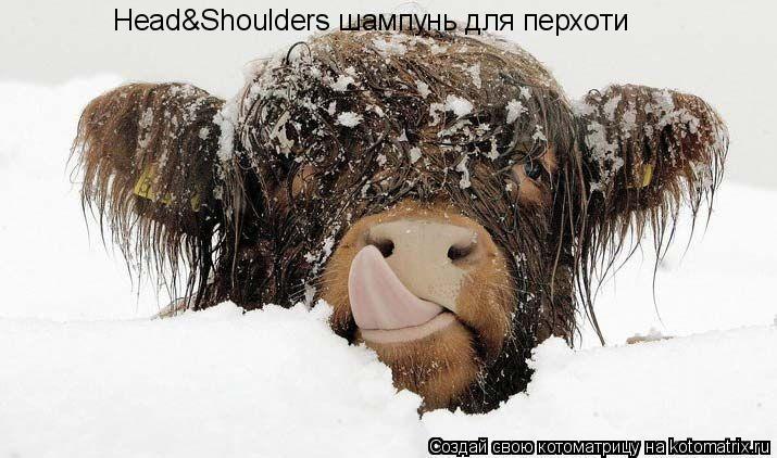 Котоматрица: Head&Shoulders шампунь для перхоти