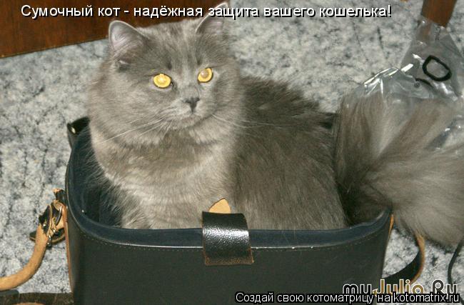 Котоматрица: Сумочный кот - надёжная защита вашего кошелька!