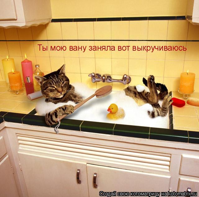 Котоматрица: Ты мою вану заняла вот выкручиваюсь Ты мою вану заняла вот выкручиваюсь