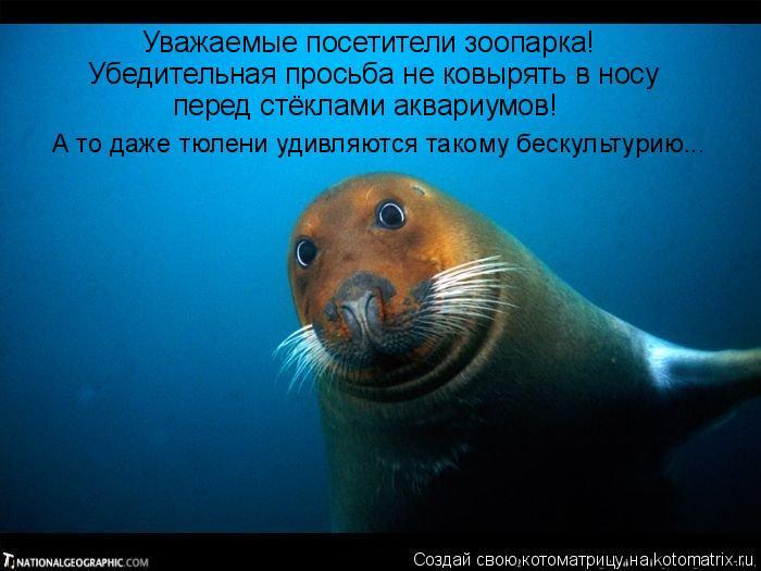 Котоматрица: Уважаемые посетители зоопарка! Убедительная просьба не ковырять в носу  перед стёклами аквариумов! А то даже тюлени удивляются такому беск