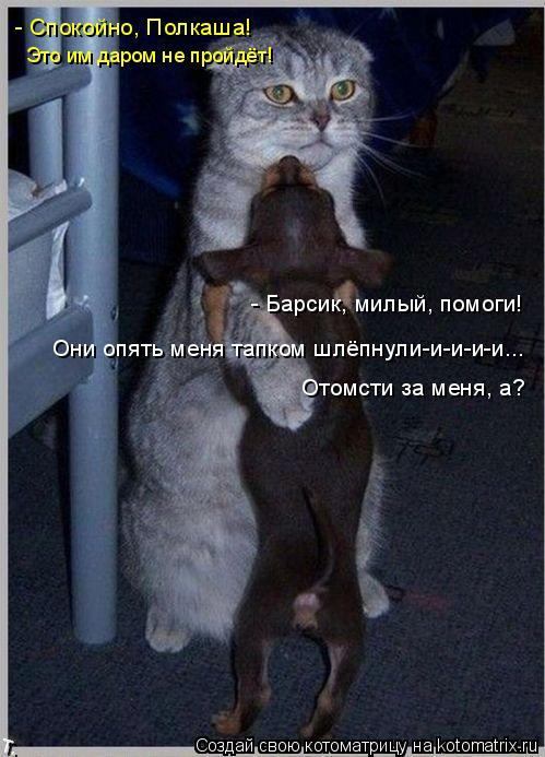 Котоматрица: - Барсик, милый, помоги! Отомсти за меня, а?  Они опять меня тапком шлёпнули-и-и-и-и... - Спокойно, Полкаша! Это им даром не пройдёт!