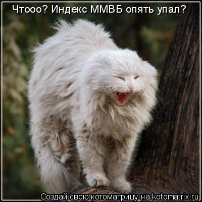 Котоматрица: Чтооо? Индекс ММВБ опять упал?