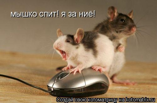 Котоматрица: мышко спит! я за ниё!