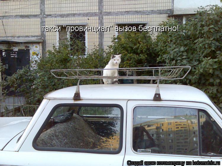 """Котоматрица: такси """"провинциал"""" вызов бесплатно!"""