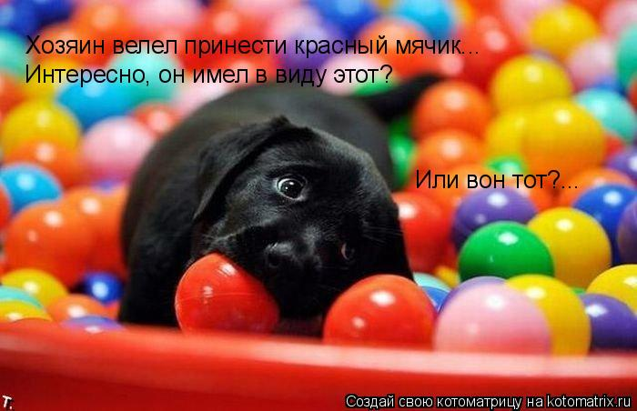 Котоматрица: Хозяин велел принести красный мячик... Интересно, он имел в виду этот? Или вон тот?...