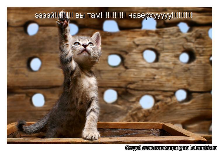 Котоматрица: ээээй!!!!!!!! вы там!!!!!!!!!!! наверхууууу!!!!!!!!!