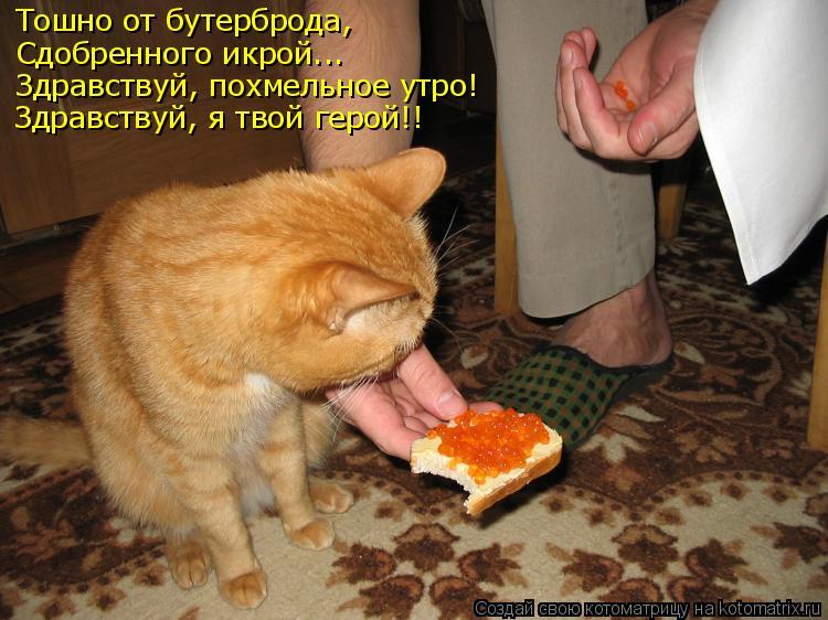 Котоматрица: Тошно от бутерброда, Сдобренного икрой... Здравствуй, похмельное утро! Здравствуй, я твой герой!!