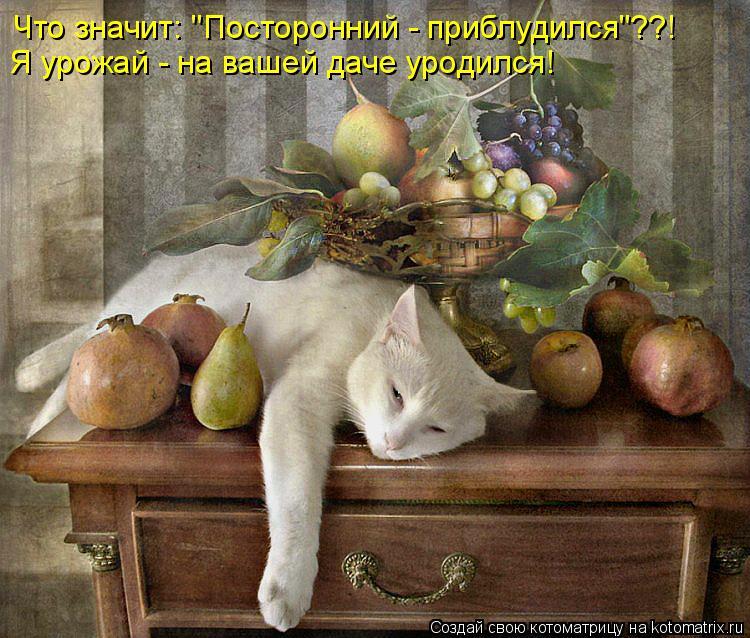 """Котоматрица: Что значит: """"Посторонний - приблудился""""??! Я урожай - на вашей даче уродился!"""