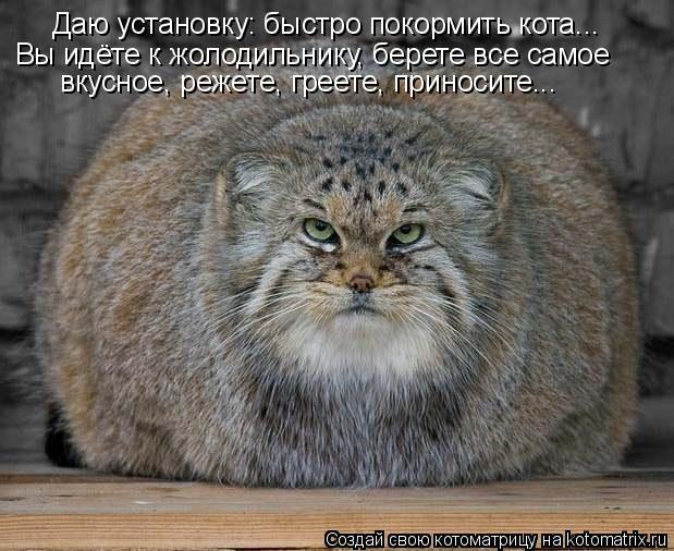 Котоматрица: Даю установку: быстро покормить кота...  Вы идёте к жолодильнику, берете все самое  вкусное, режете, греете, приносите...
