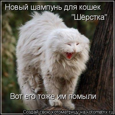 """Котоматрица: Новый шампунь для кошек """"Шёрстка"""" Вот его тоже им помыли"""