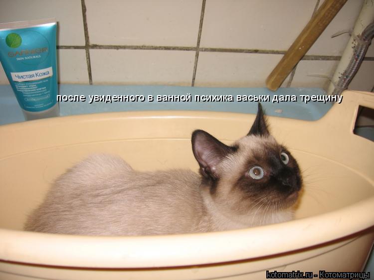 Котоматрица: после увиденного в ванной психика васьки дала трещину