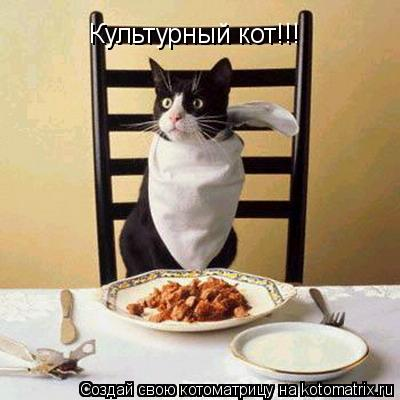 Котоматрица: Культурный кот!!!