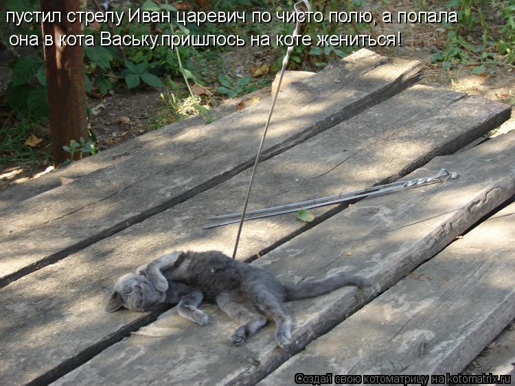 Котоматрица: пустил стрелу Иван царевич по чисто полю, а попала  она в кота Ваську.пришлось на коте жениться!