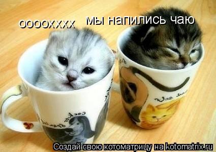 Котоматрица: оооохххх мы напились чаю