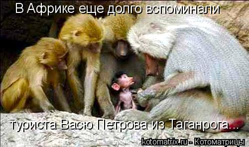 Котоматрица: В Африке еще долго вспоминали туриста Васю Петрова из Таганрога...